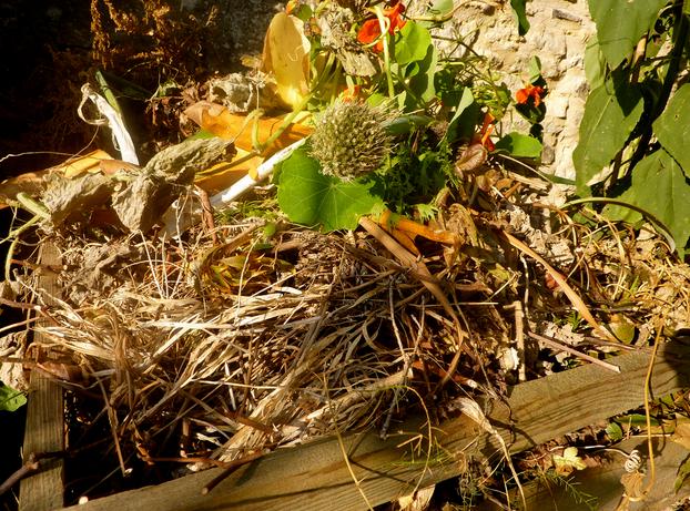 A Guide to Having a More Eco Friendly Garden