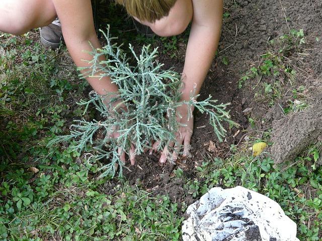 gardener-59727_640