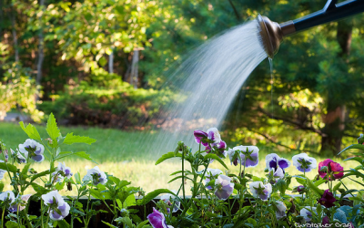 Save Water in the Garden with These Conservation Techniques