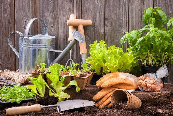 A Beginners Guide to Growing Your Own Fruits and Veg
