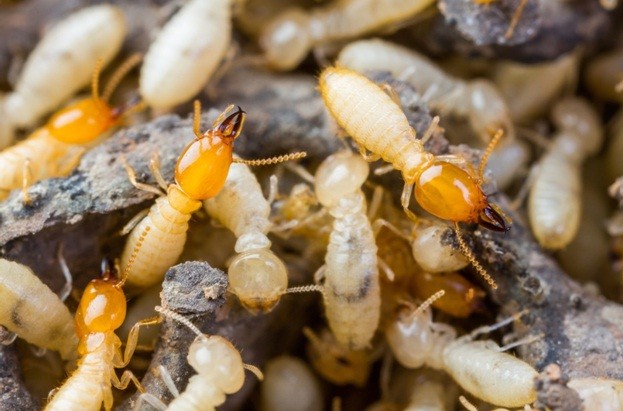 Swarms Hiding in Your Home: Termite Infestation Detection Made Simple
