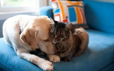 How having a family pet can change your home's dynamic