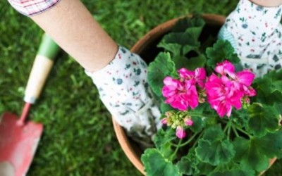 Clearing Your Garden Ready for Spring
