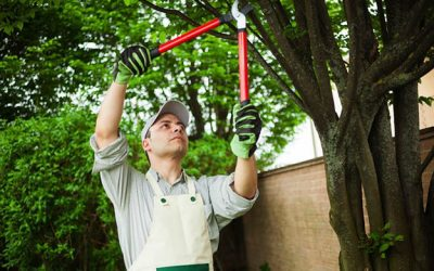 Keeping Trees Trimmed Saves Time and Money