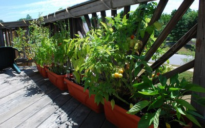 Traditional Planters: Creating a Dream Decking Area