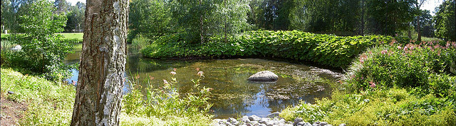 How to Build a Nature Pond in Your Garden, in Just One Weekend