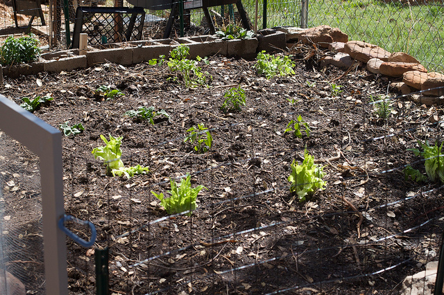 In 2014 Why Don't You Try Growing Your Own Vegetable Patch?