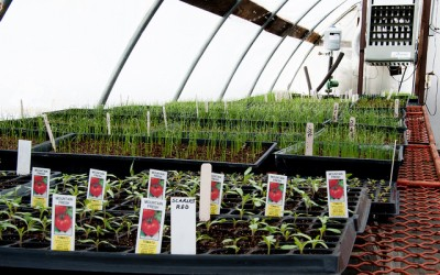 Everything You Need To Know About Creating A Cultivation Center