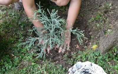 Make Your Garden More Eco-Friendly