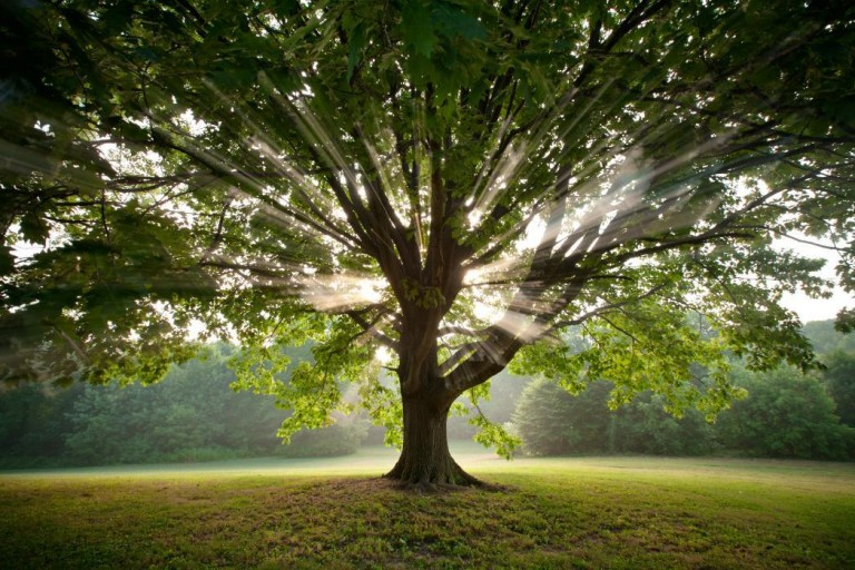 Science Proves It: Trees Are More Helpful Than You May Imagine