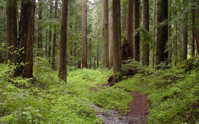 Think Limiting Use of Paper Products Encourages Forest Growth? Think Again