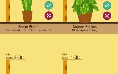 10 of the best indoor house plants