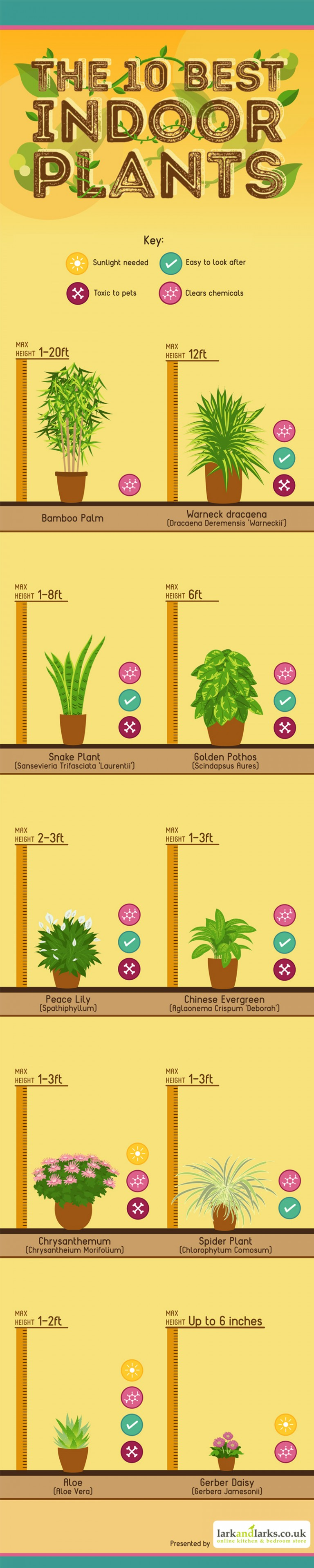 10 of the best indoor house plants
