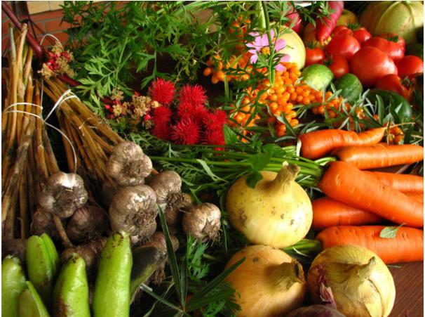 Grow It Yourself: A Guide to Organic Gardening