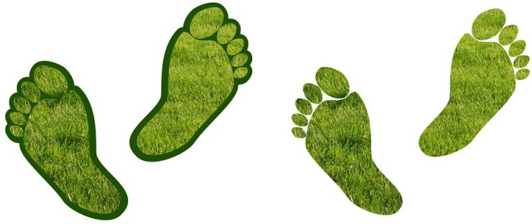 Steps to Reduce Your Carbon Footprint at Home