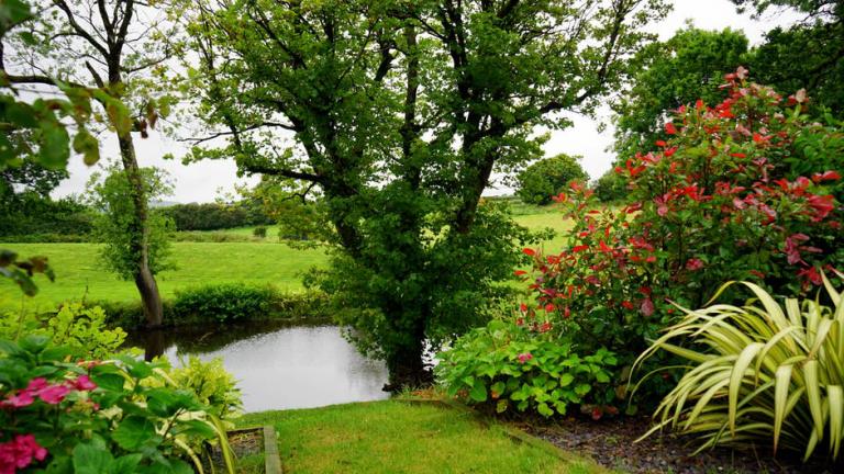 3 Ways to Keep Your Garden Healthier