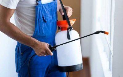 Natural Pest Control Options