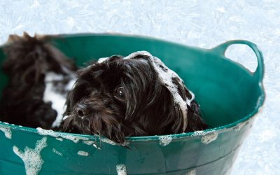 Choosing the Best Dog Shampoo