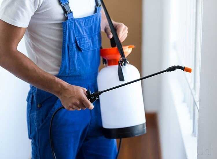 5 Signs It's Time to Call Professionals for Your Pest Issue