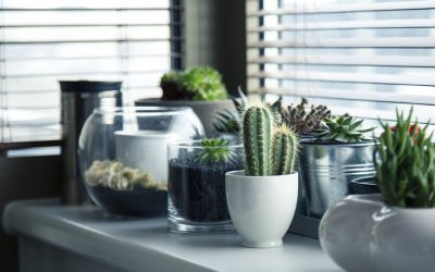 Creating a Garden to Accent Your Home