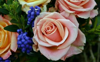 How to Care For Roses in Summer The Right Ways