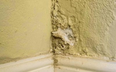 How to Treat Damp Walls Before Painting