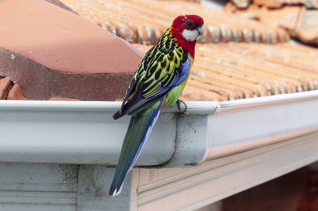 Cleaning & Maintenance Guide for Roof Gutters