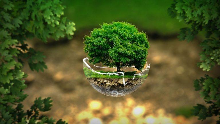 Eco Alternatives to Conventional Pest Control