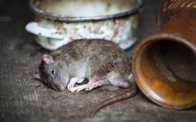 Tips For Keeping Rodents Out of Your Home